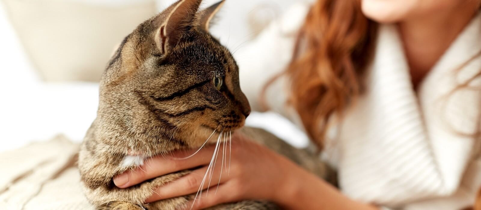 Conseils Perfect Fit avant d'adopter un chat